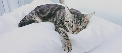 meow parlour 1