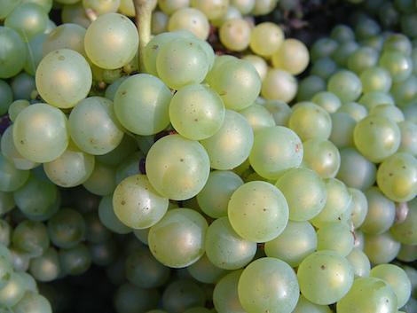 winetaboos_chardo