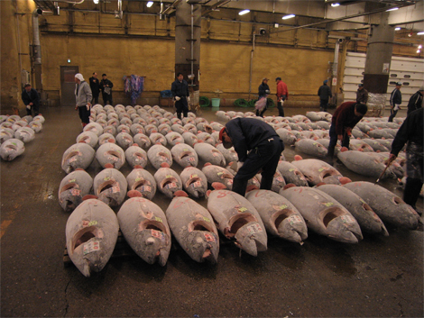 Tuna at the Tsukiji fish market in Tokyo. (Photo: Wikimedia Commons)