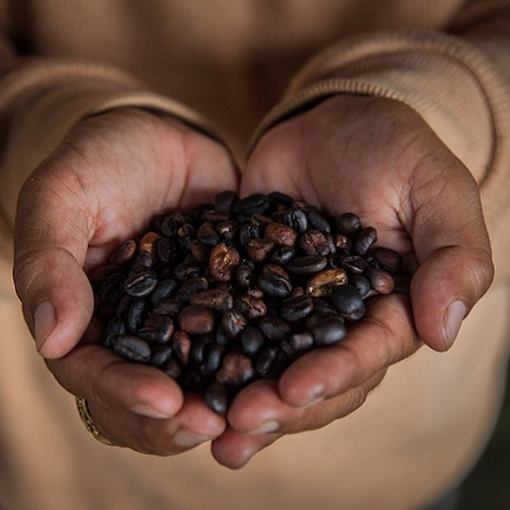 Civet Coffee In Indonesia