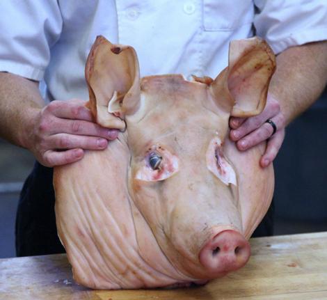 pigshead