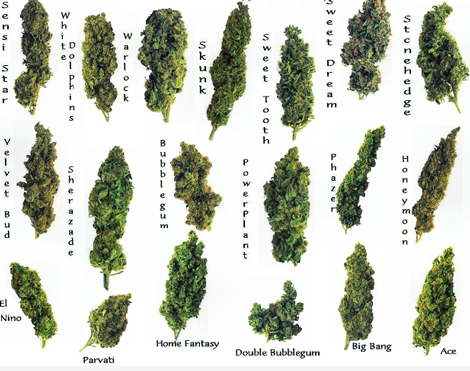 different-marijuana-strains
