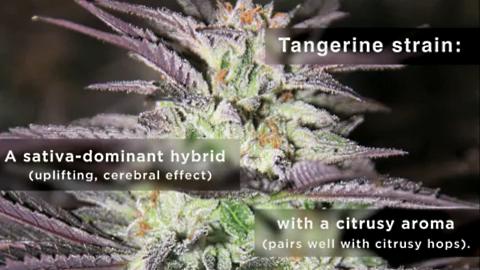 tangerine high-pa 3