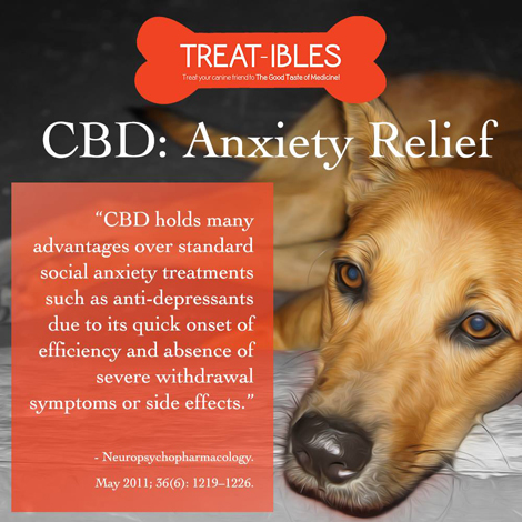 CBD Edibles for Pets
