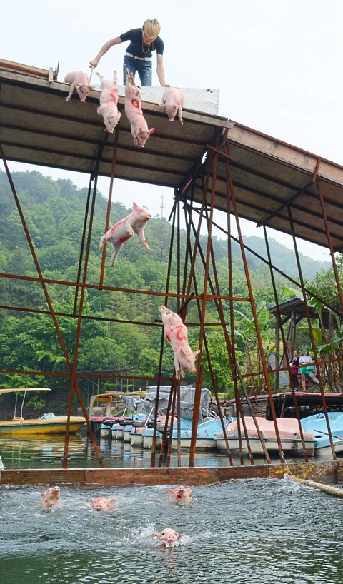 pigs flying 4