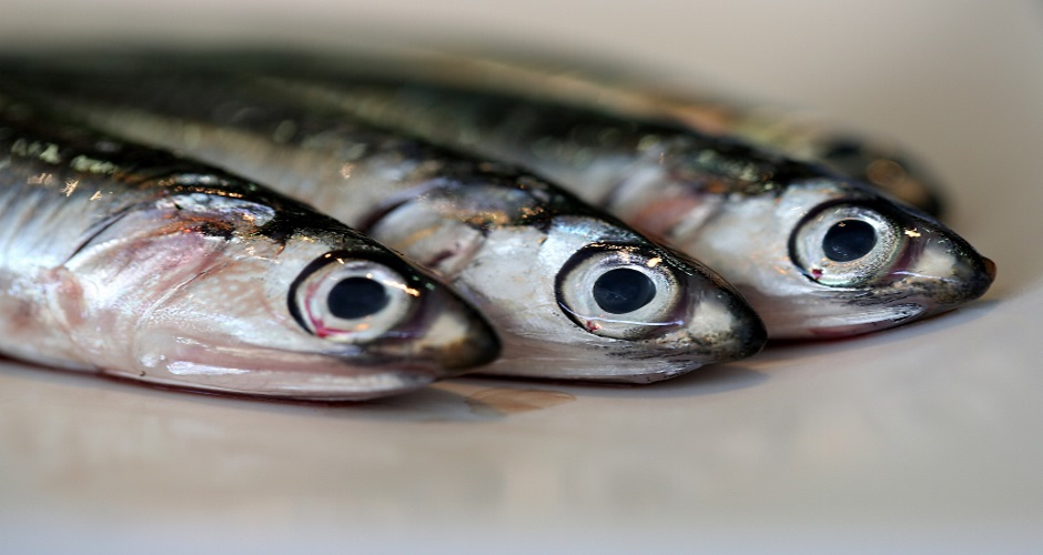 Our massive hunger for sustainable seafood isn 39 t actually for Most sustainable fish