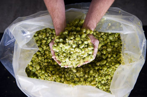 handfull-of-hops
